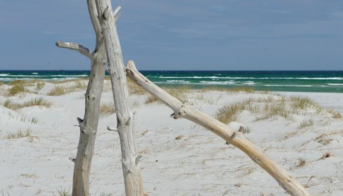 Bornholm-Beach-Wood